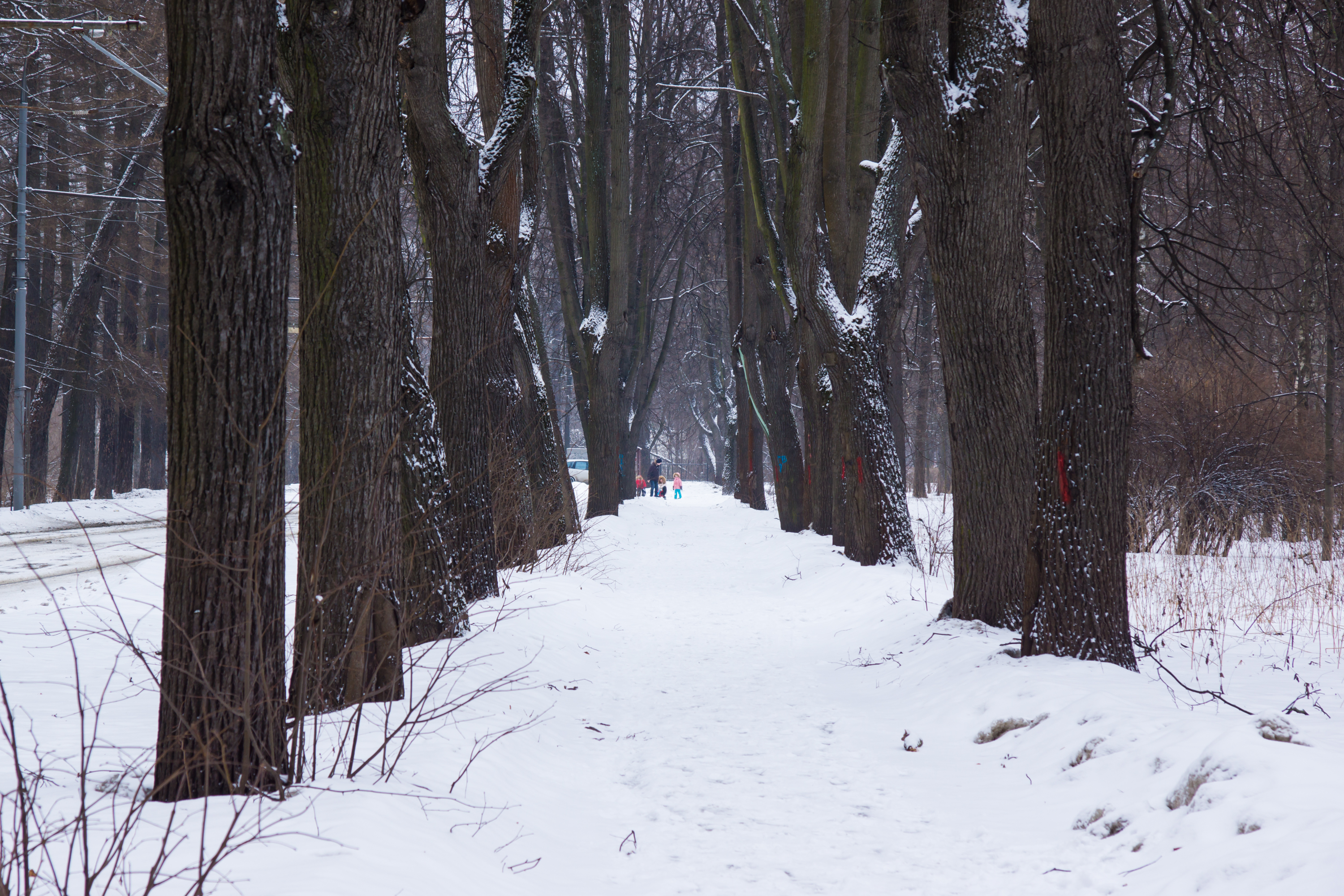 Winter in izmaylovskiy Park