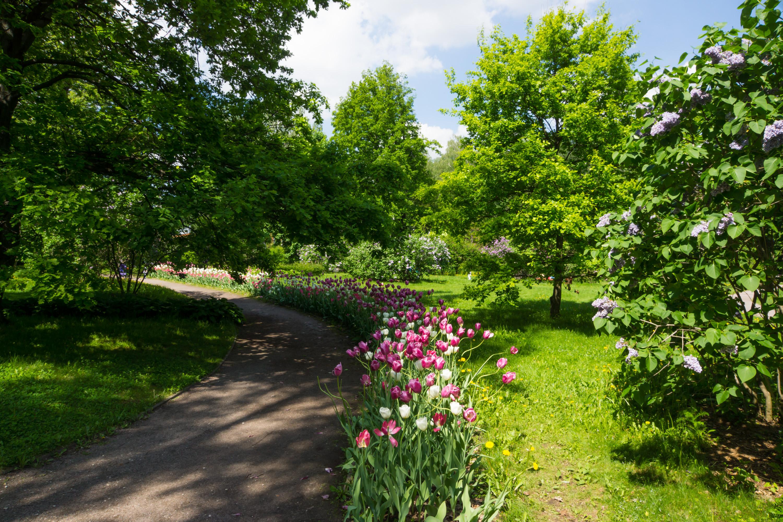 Tulpen in Sokolniki