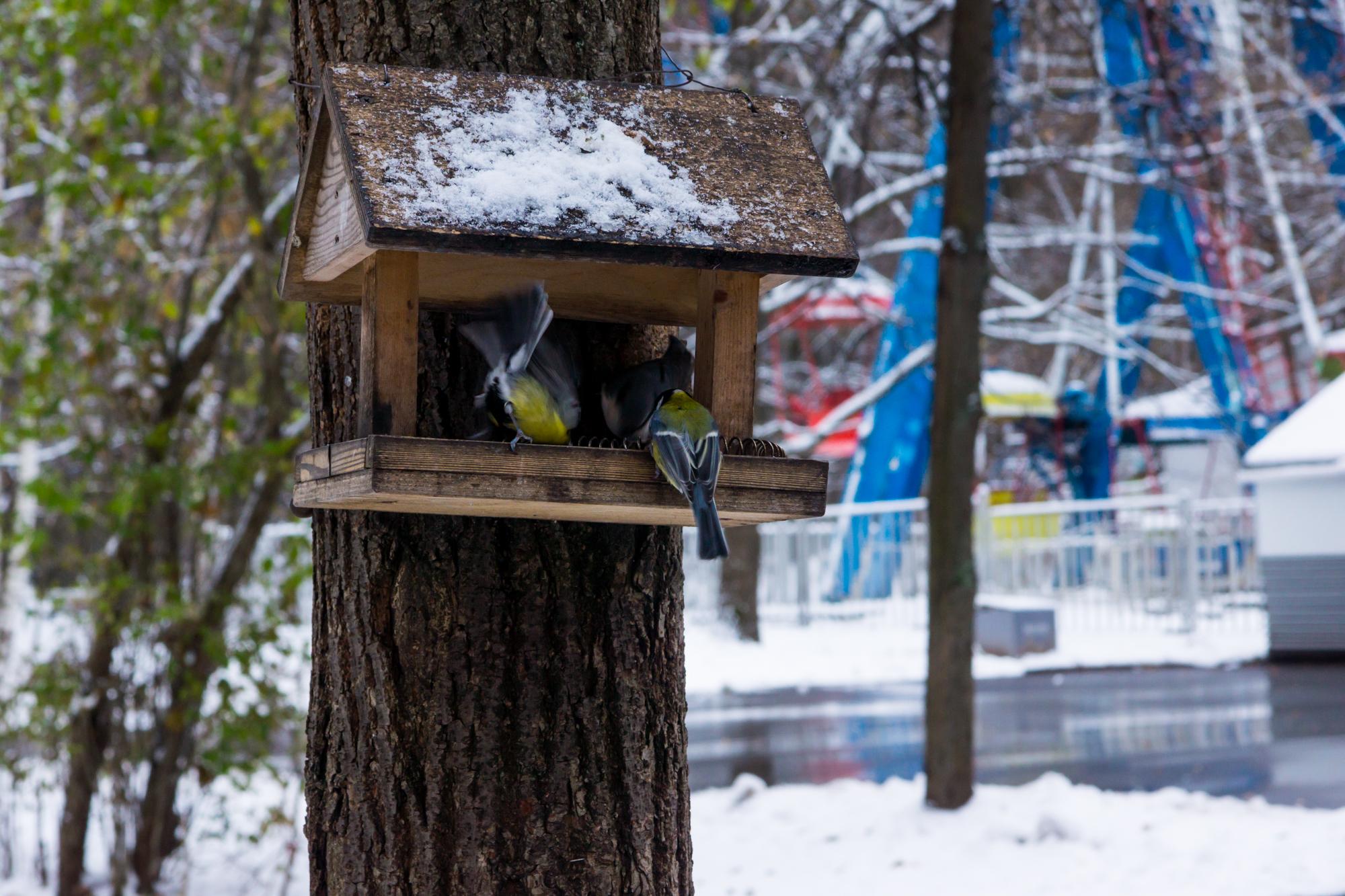 Vögel im Park