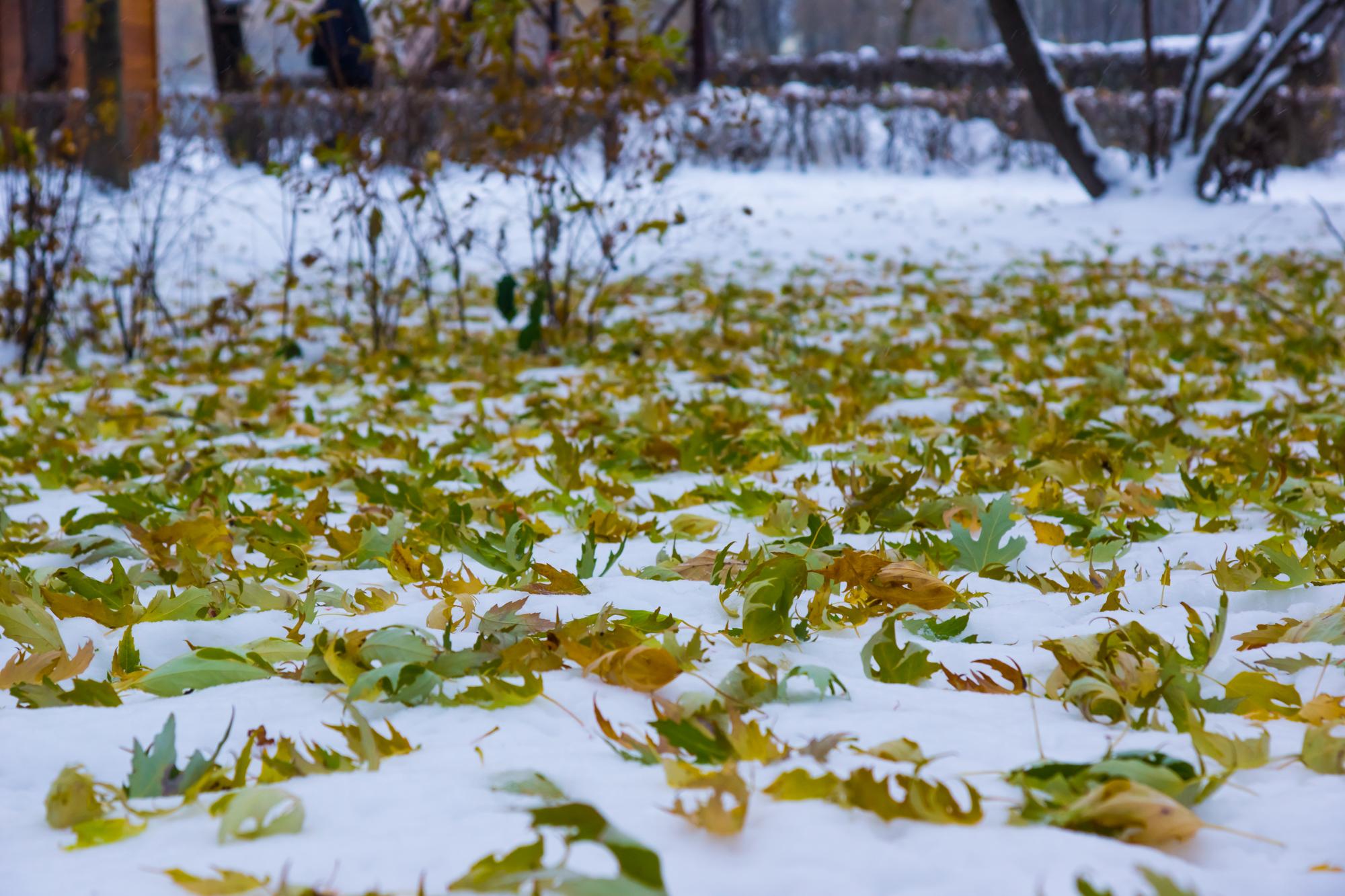 Blätter im Schnee