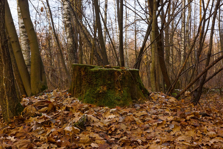 Измайловский парк поздней осенью