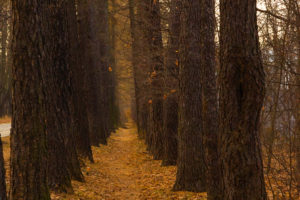 Photo of autumn Park-Moscow 12-16 years