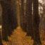 Foto de otoño Parque-Moscú 12-16 años