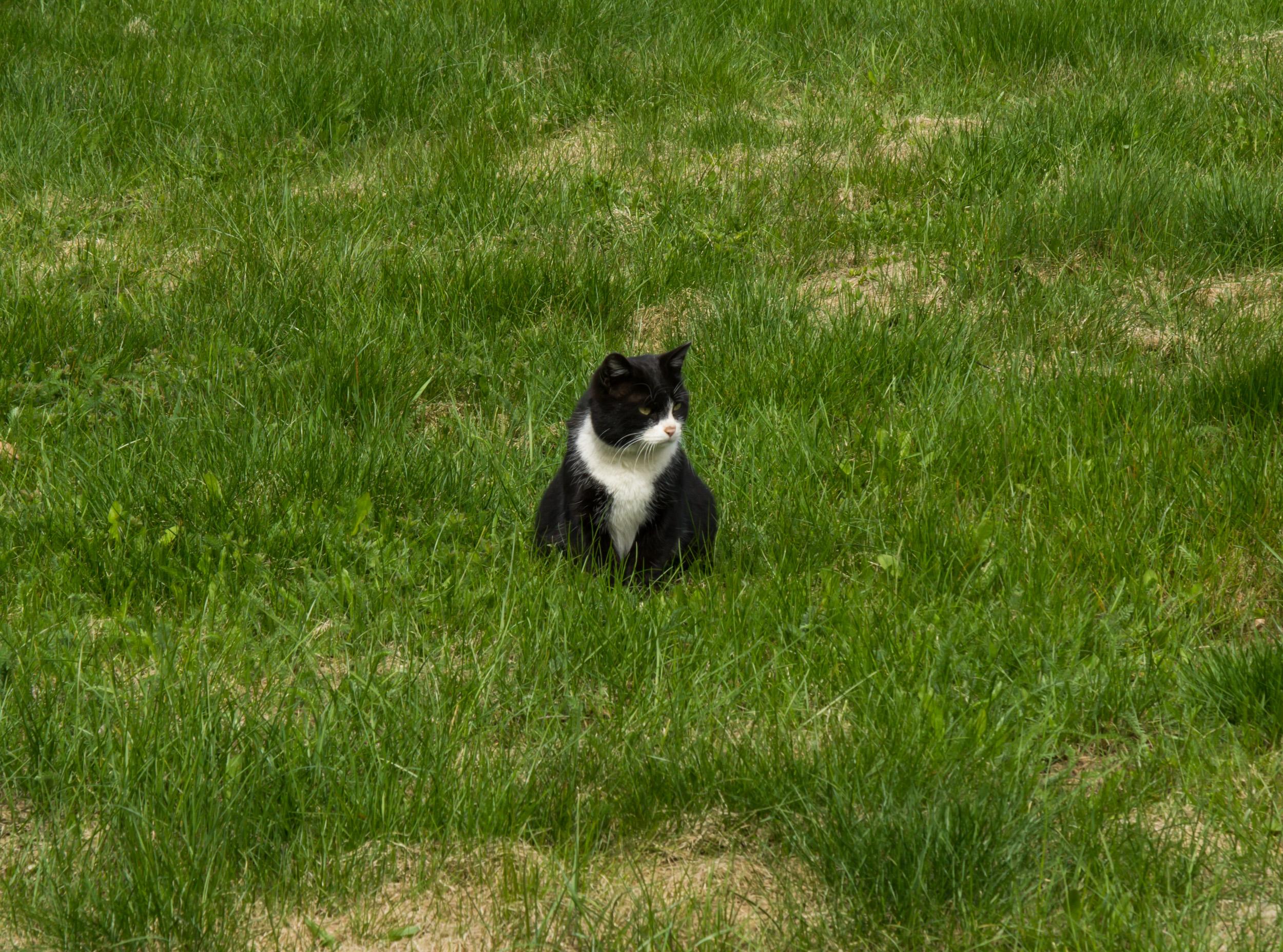 Местный кот в Колменском