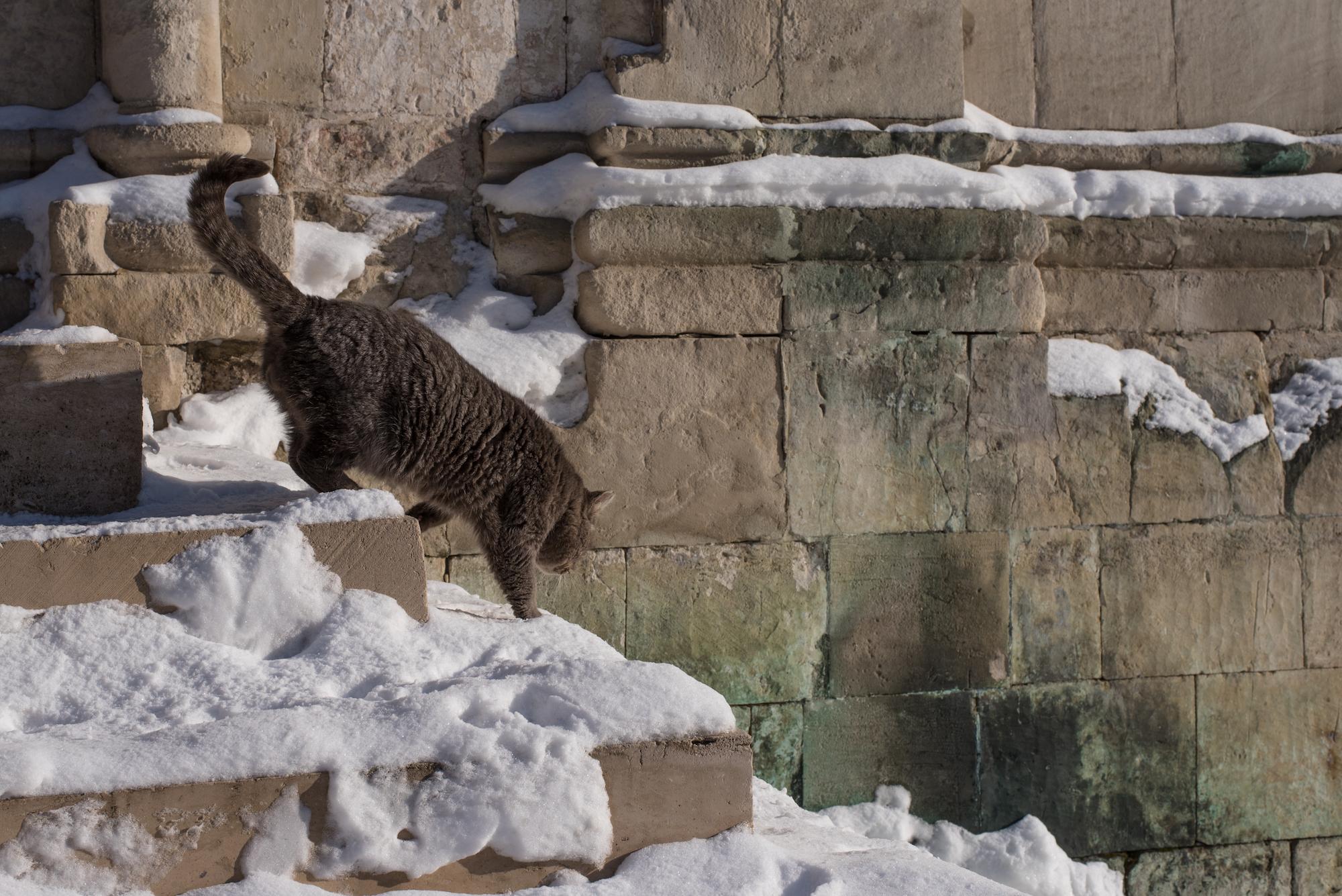 Кот - житель города и герой городской фотографии