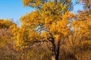 Осенний пейзаж — фото из российской провинции
