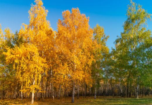Миллионы изображений на shutterstock.com