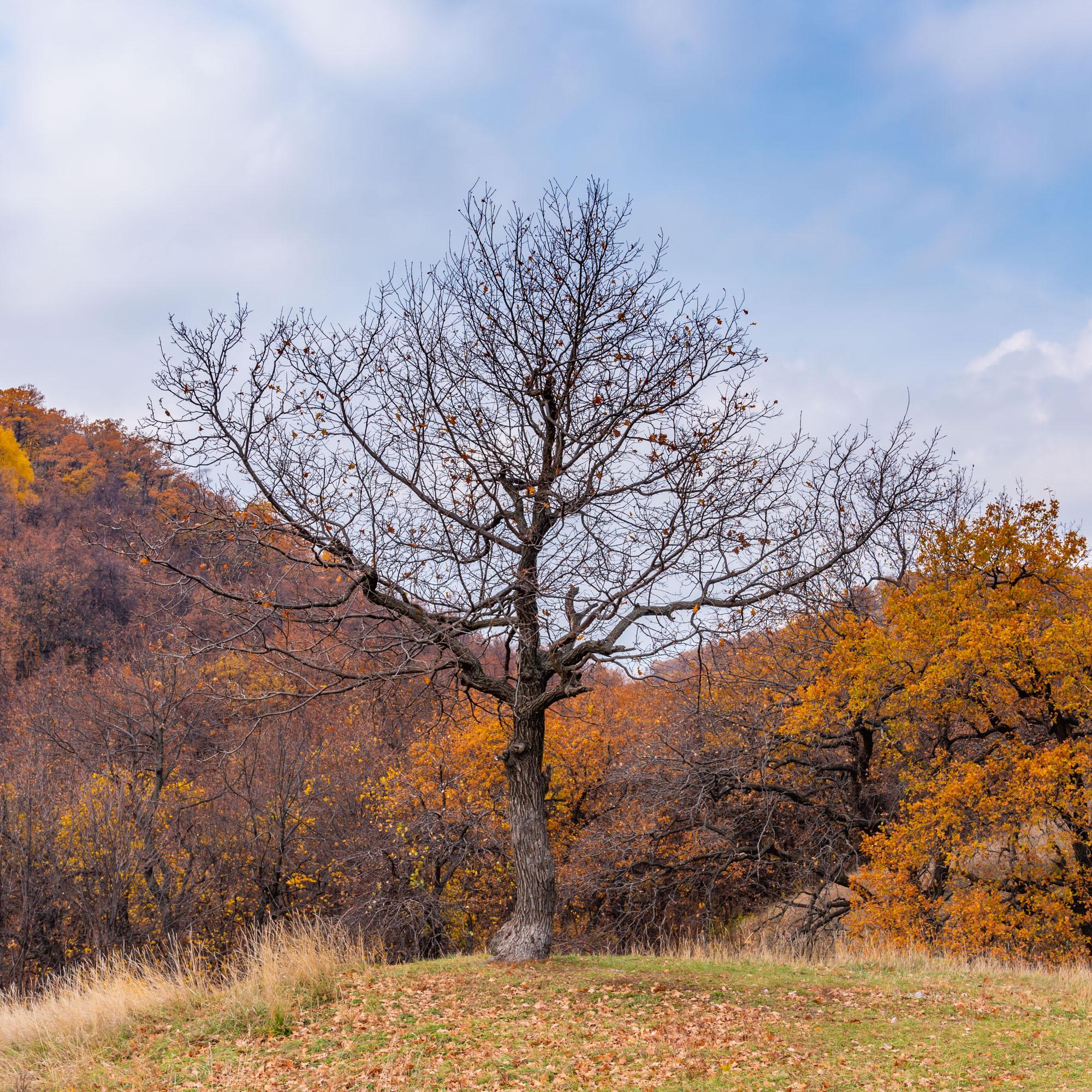Дерево с голыми ветками