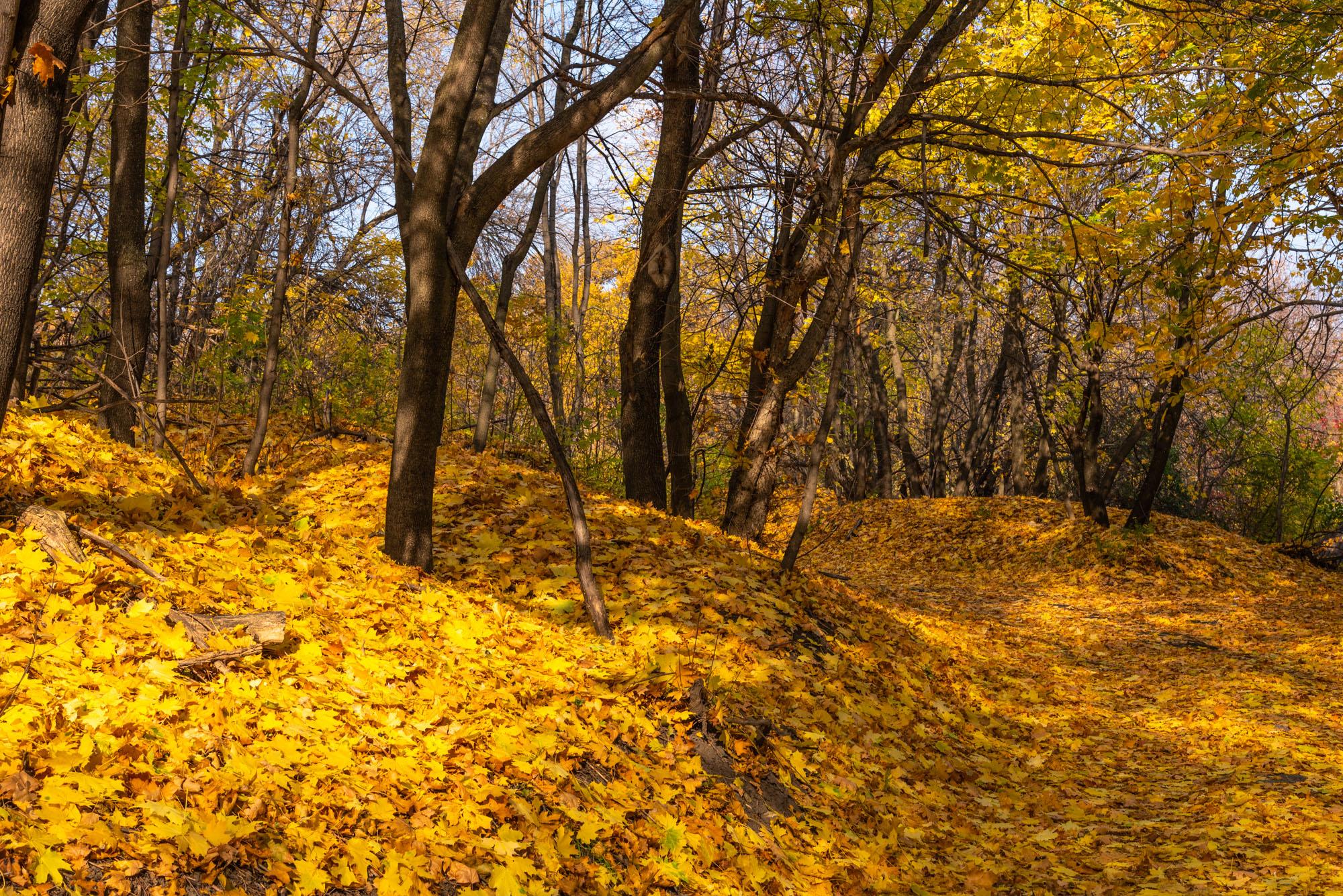 Смирновское ущелье - лес