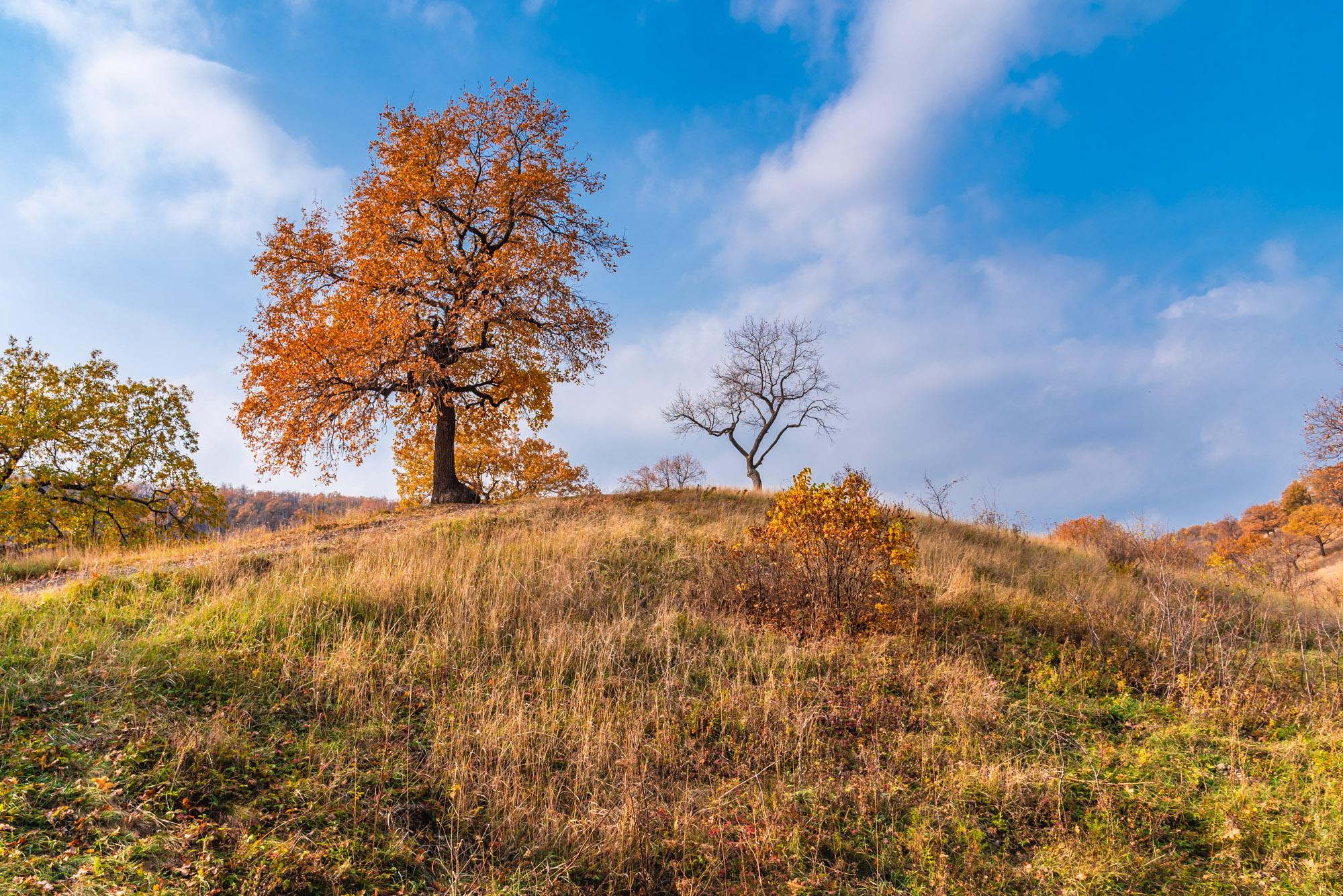 Синее небо и золотые краски осени