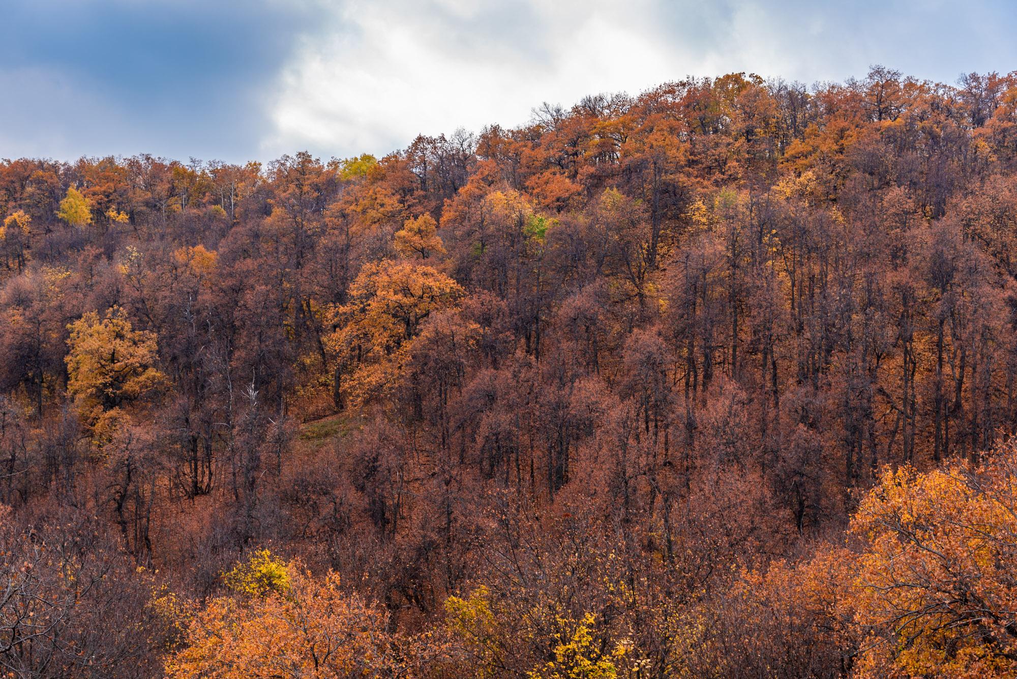Склоны, поросшие деревьями