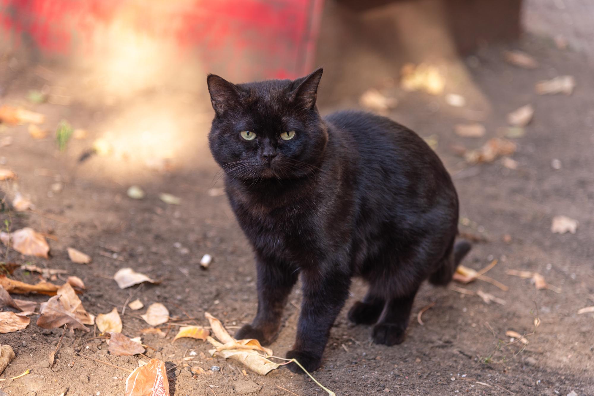фото бездомных кошек