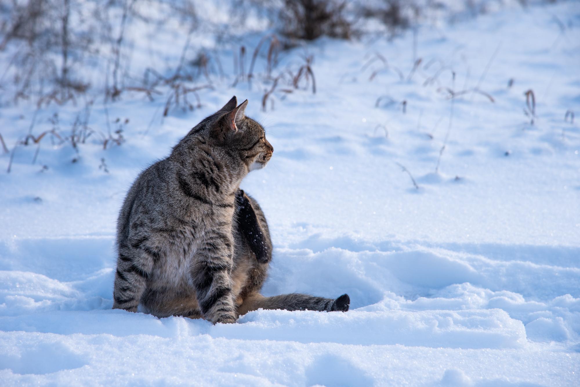 уличный кот в лесу