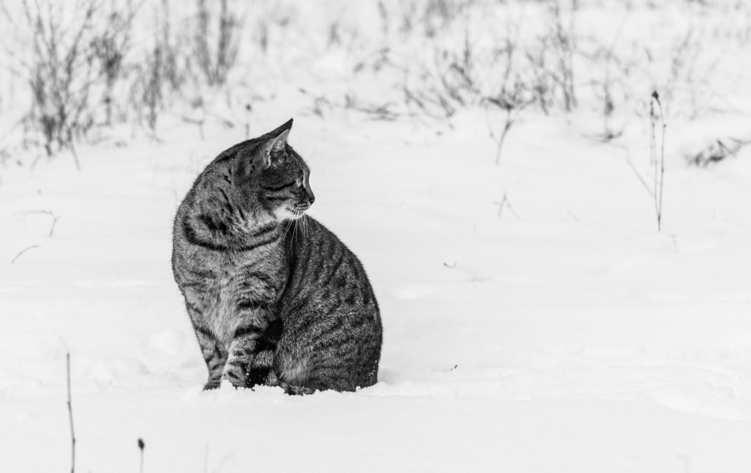 Хозяева дворов и улиц – фото бездомных кошек и котов