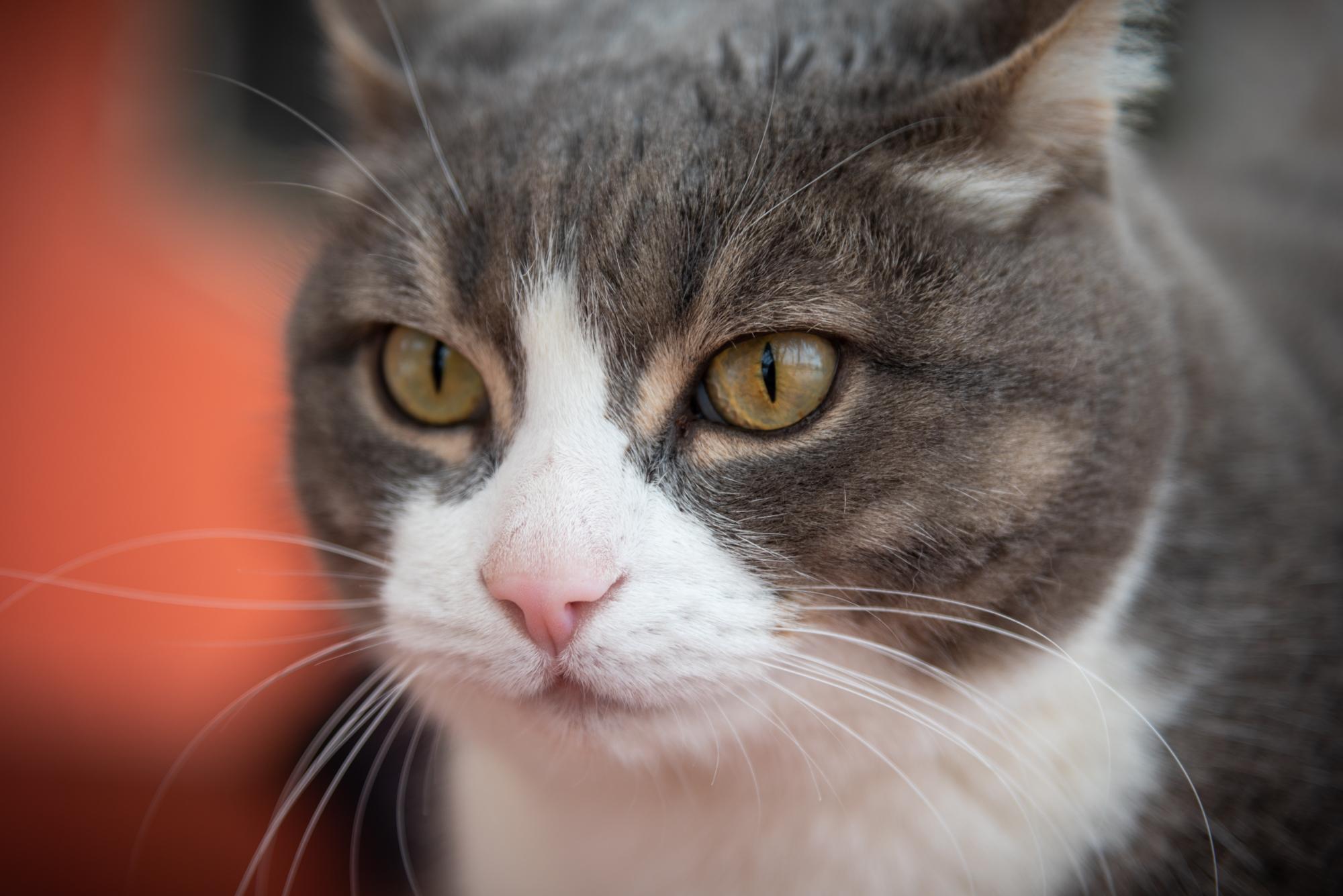 фото бездомных кошек и котов