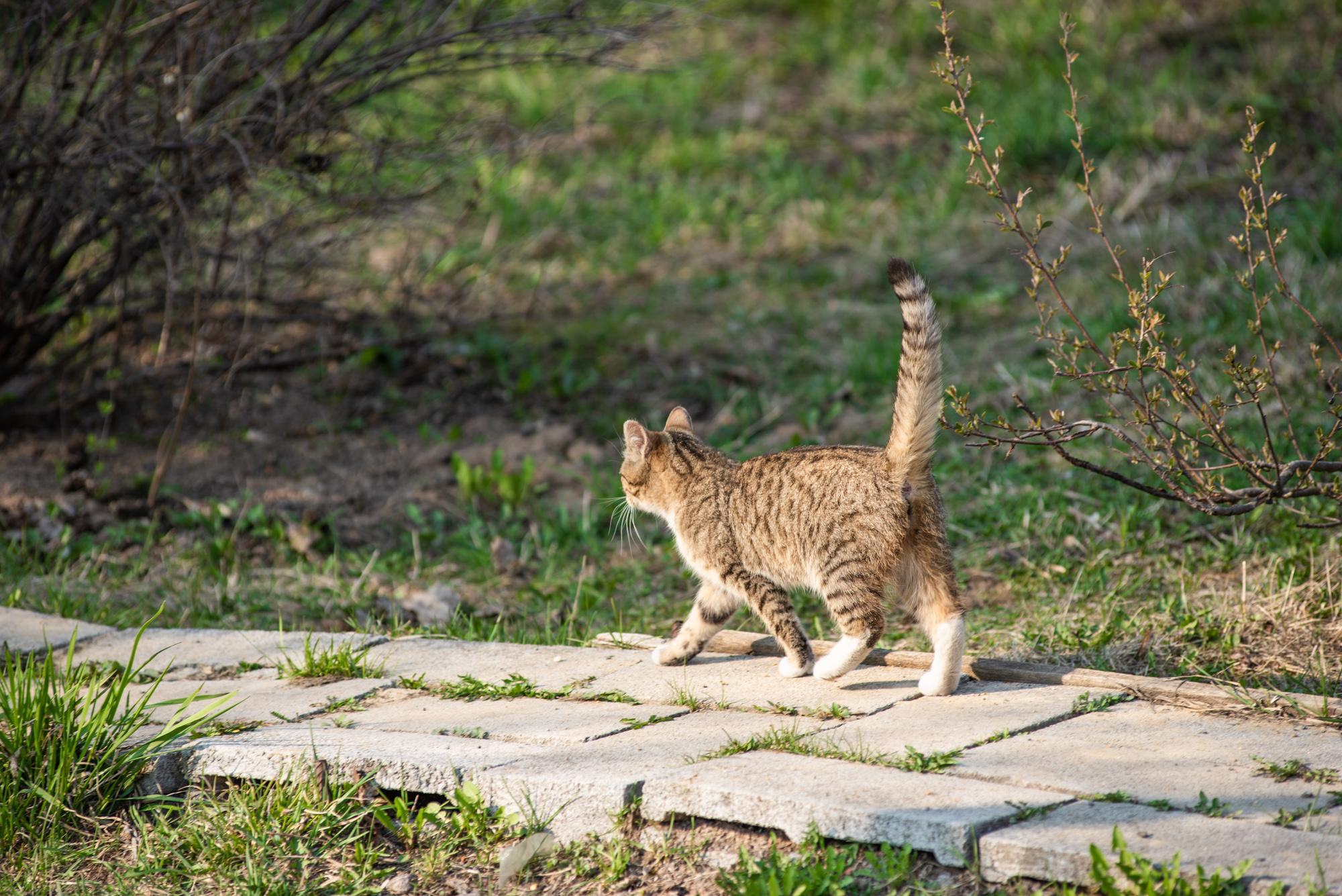 Кот идет по тропинке