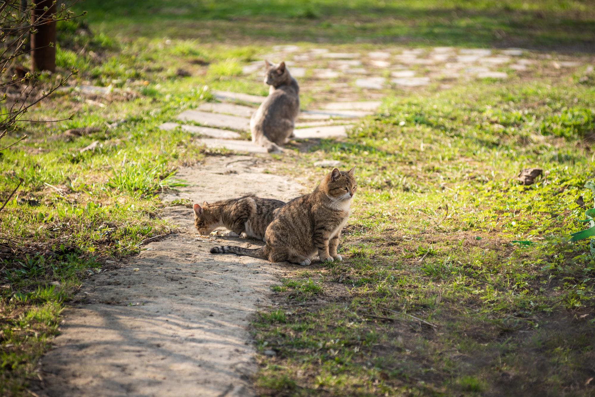 коты В Коломенском