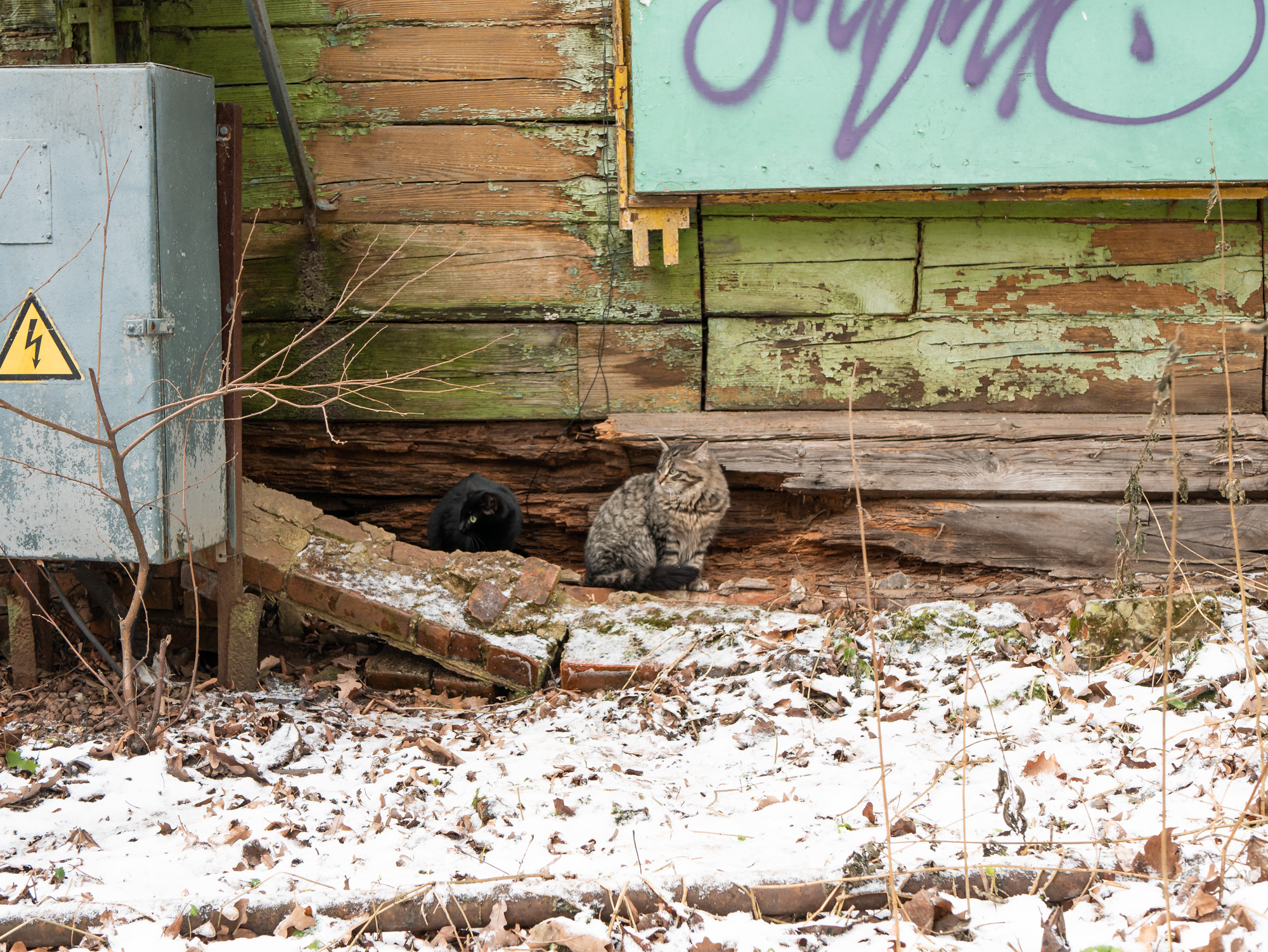 кошки в заброшенном доме