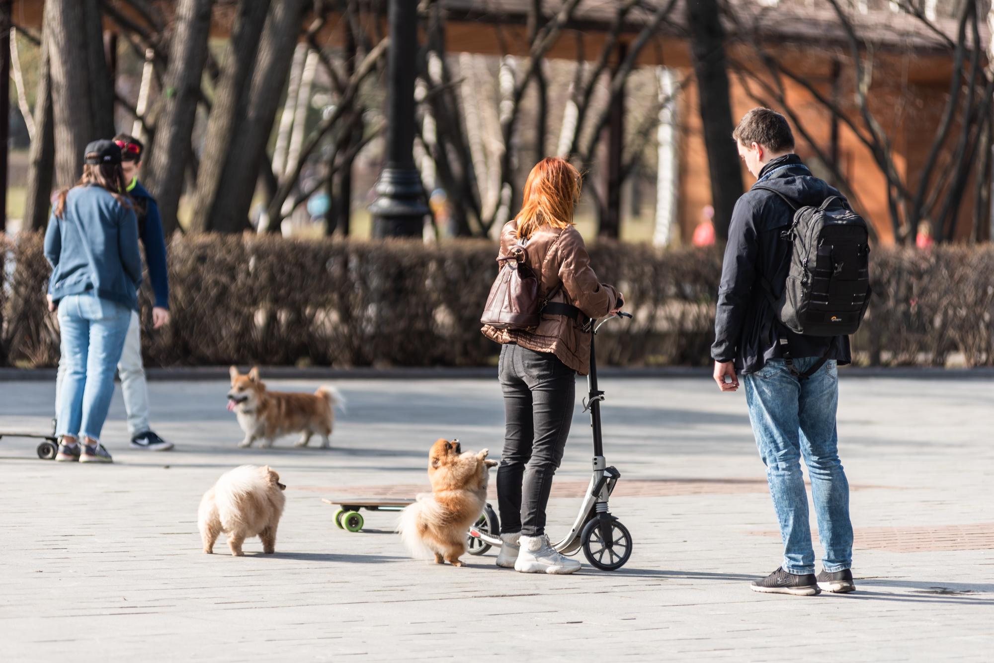 Прогулка с собаками во время эпидемии