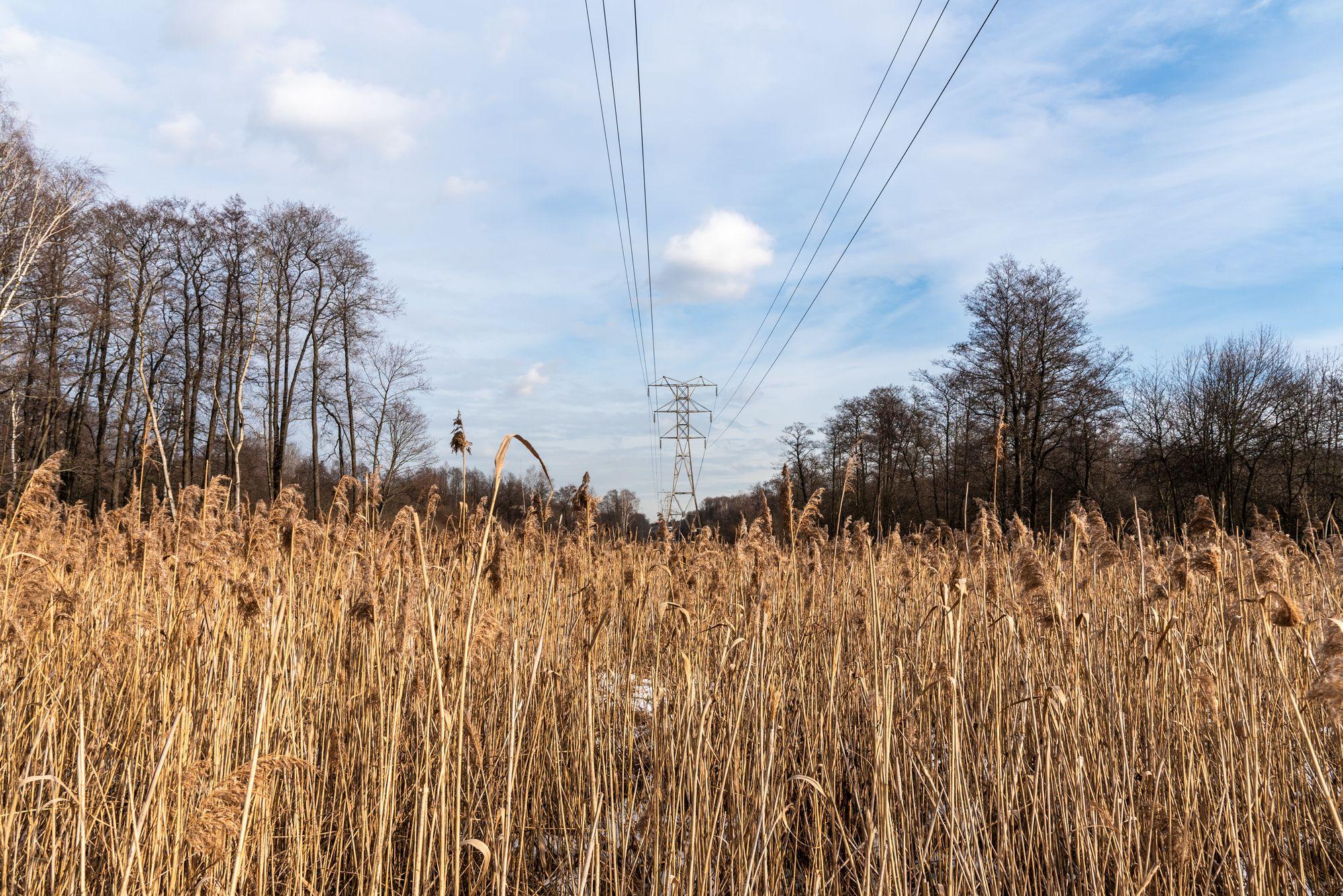 Где можно фотографировать в Москве в выходные – Измайловский лесопарк