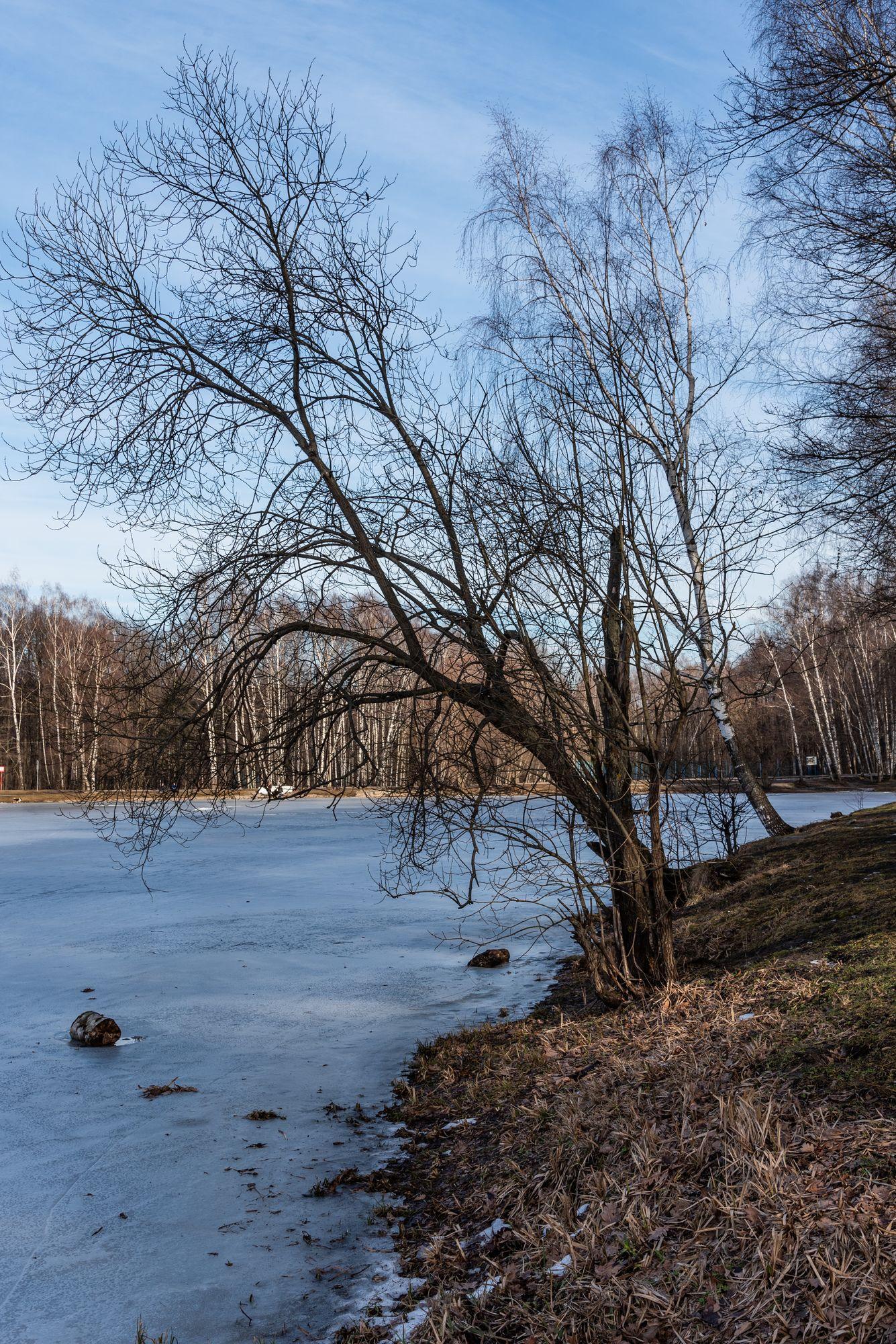 берег пруда в парке