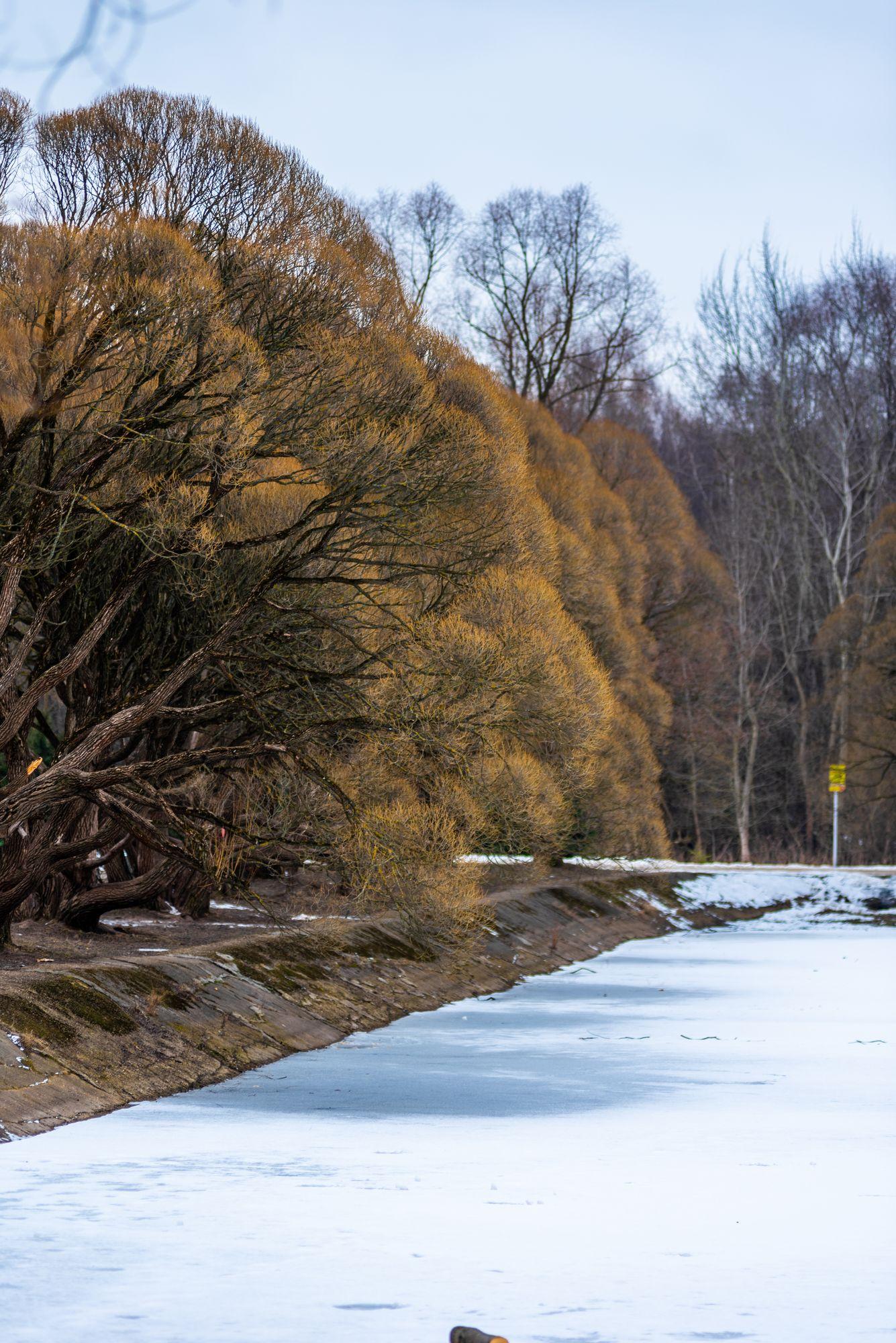 Деревья на берегу пруда