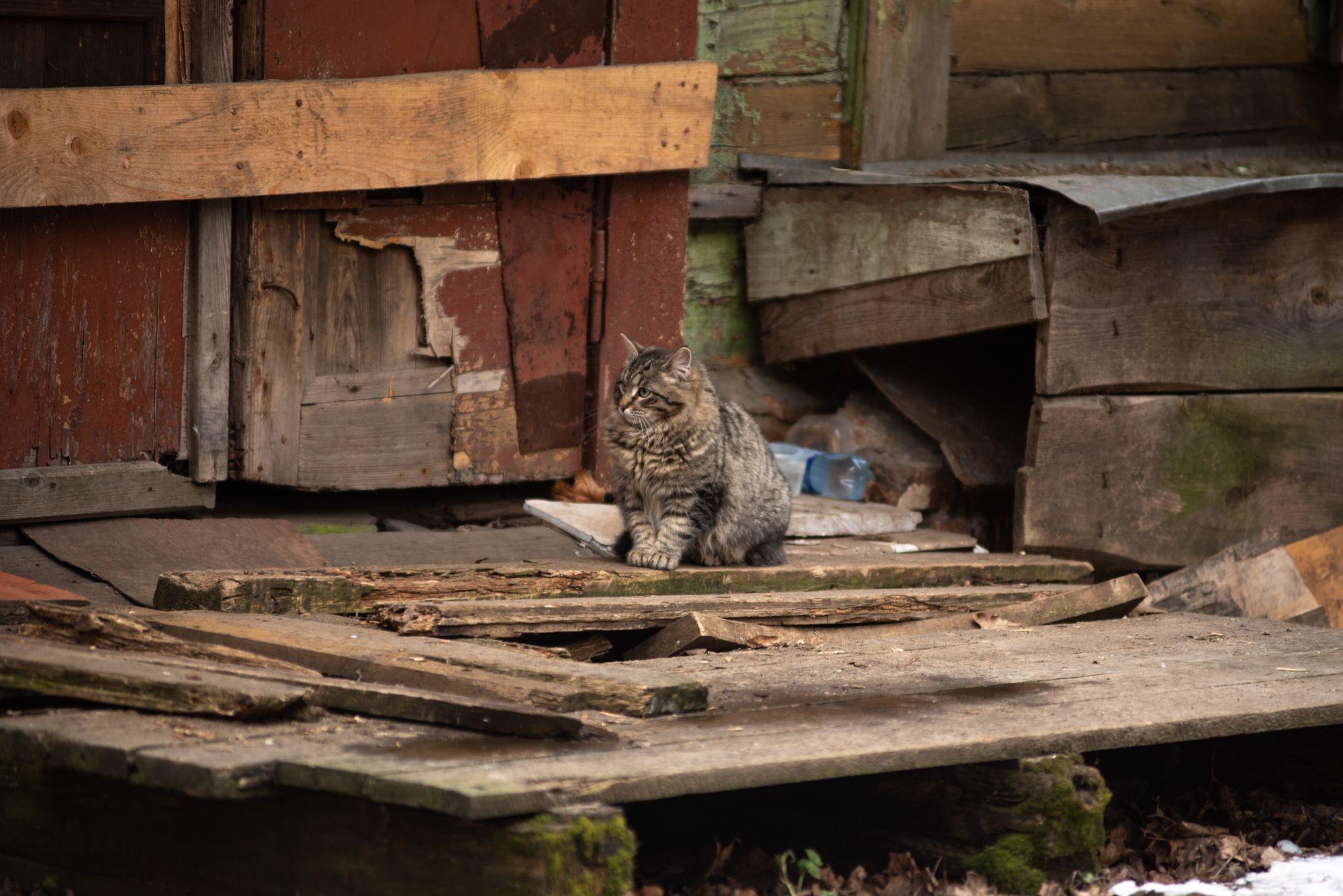 фото бездомного котика