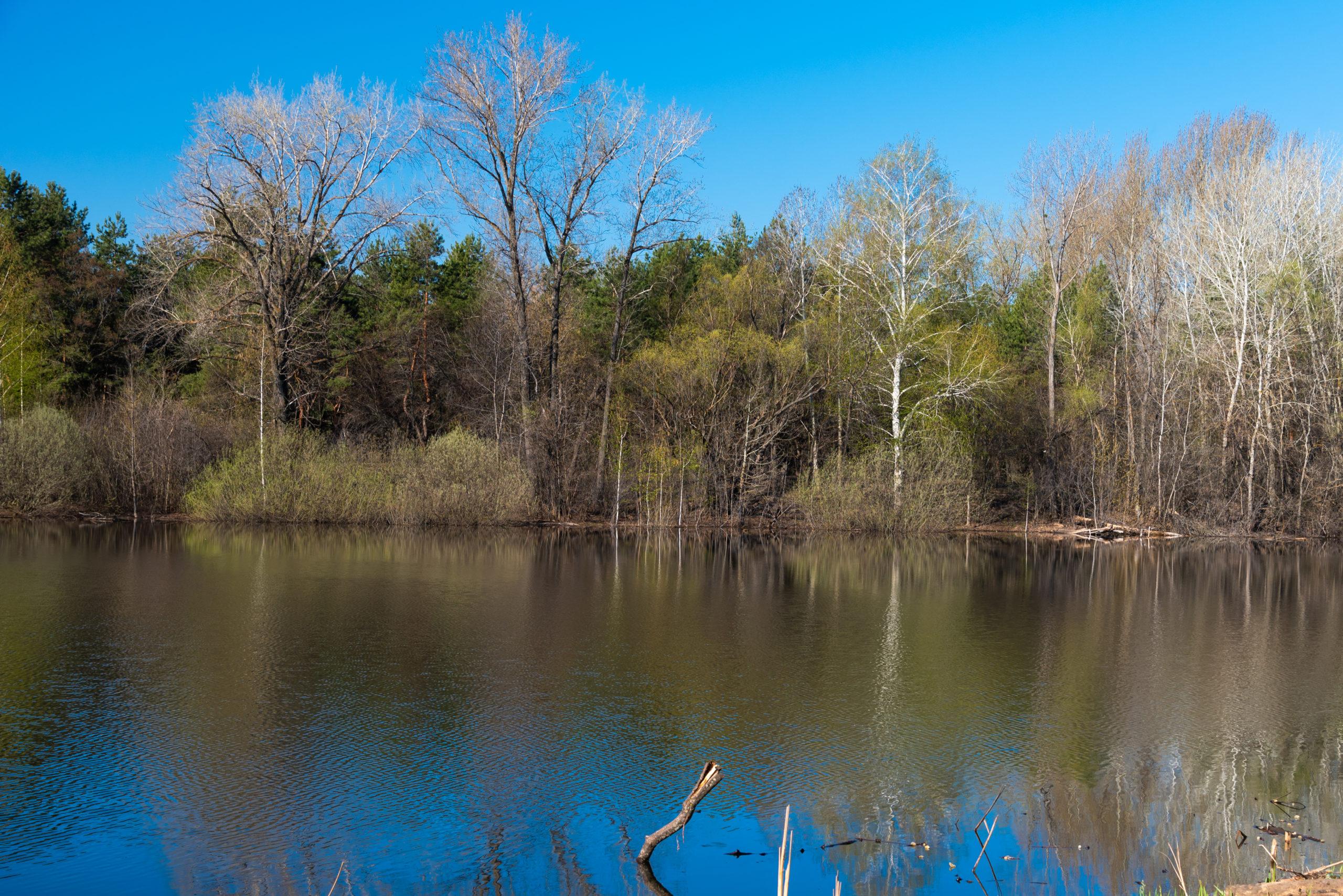 лесное озеро весной